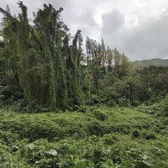 Mount Archer用戶圖片
