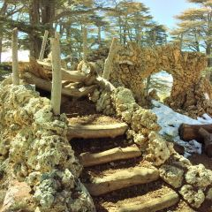 The Cedars of God User Photo