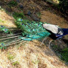 Lamington National Park User Photo