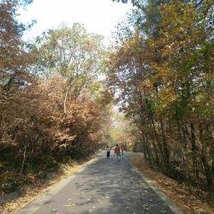 蜀山森林公園用戶圖片