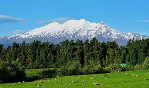 Tongariro National Park,Recommendations