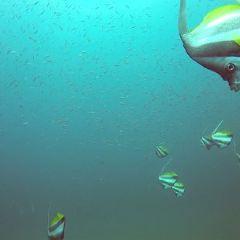 Scuba Quest Dive Center Kamala User Photo
