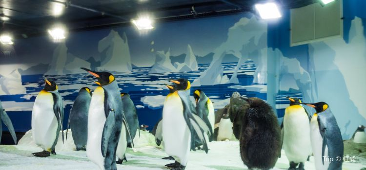 Kelly Tarlton's Antarctic Encounter & Underwater World