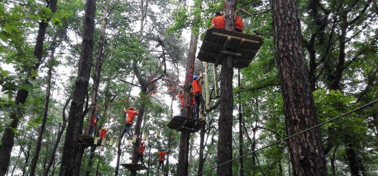 大奇山瘋狂森林主題樂園1
