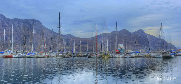 Hout bay Harbour1