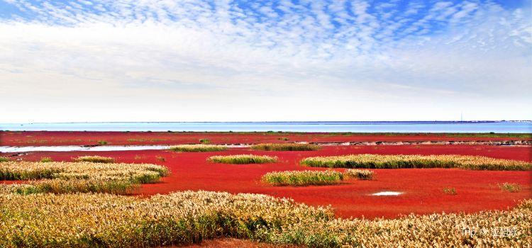 盤錦紅海灘風景區1