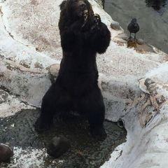 Noboribetsu Bear Park User Photo