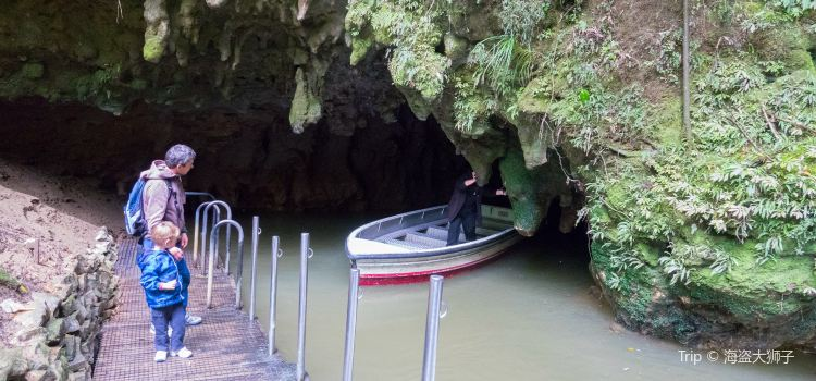 Waitomo Glowworm Caves2