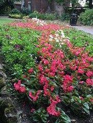 Abbots Mill Garden用戶圖片