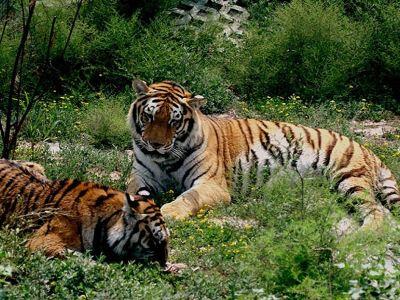 太原動物園