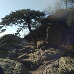 Five doctors pine User Photo