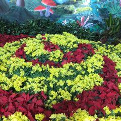 City of Flower User Photo