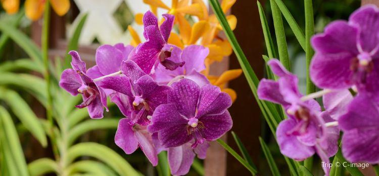 Orchid Garden3
