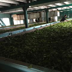 Glenloch Tea Factory User Photo