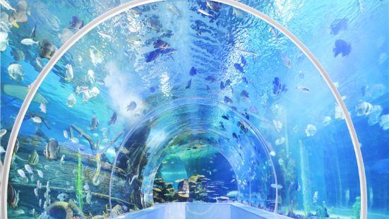 臨沂海洋世界主題公園