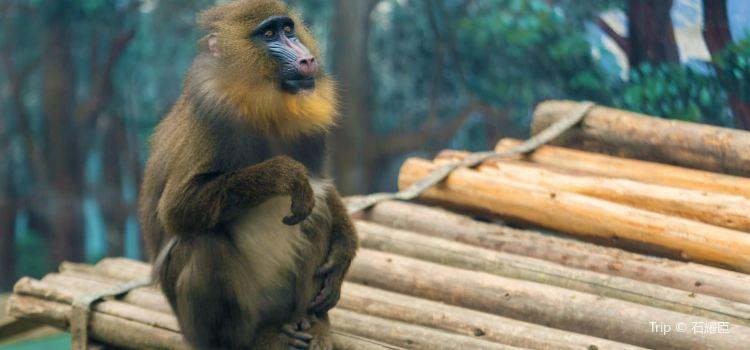 Chengdu Zoo1