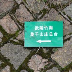 武陵竹海用戶圖片