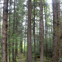 原始森林用戶圖片