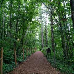 森林精靈陽臺用戶圖片