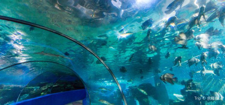 無錫海底世界2