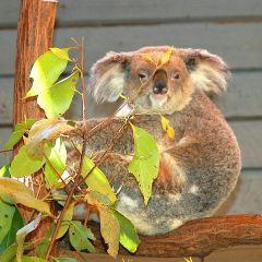 Australian Outback Spectacular User Photo