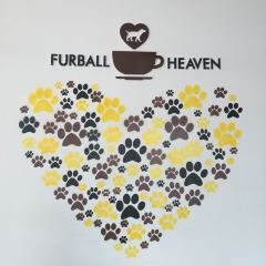 Furball Heaven User Photo