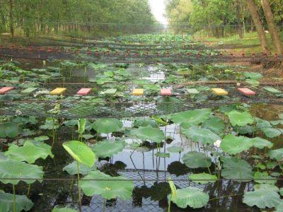 Hongzehu Vernacular Botanical Garden