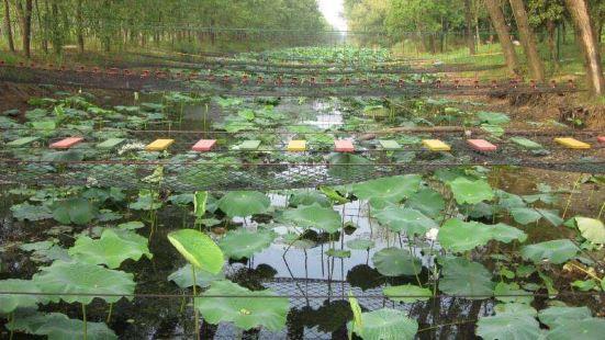 洪澤湖鄉土植物園