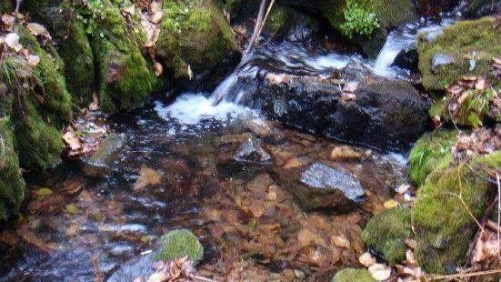 Foshoushan National Forest Park