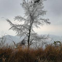 觀霧山森林公園用戶圖片