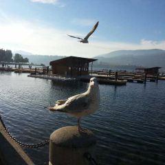 Okanagan Lake User Photo