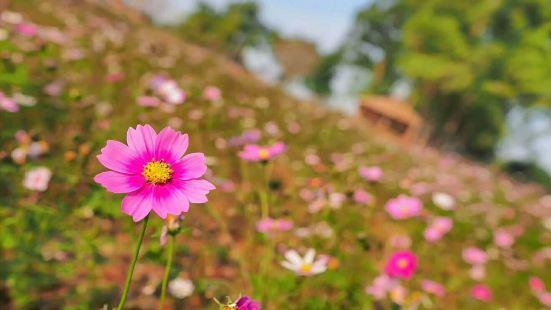 Dexianzhuang Sakura Garden