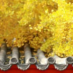 Peking Five-Pagoda Temple (Wuta Si) User Photo
