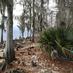 Fontainebleau State Park User Photo
