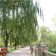 濱河公園用戶圖片