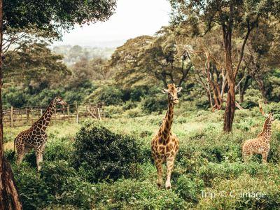 內羅畢國家公園