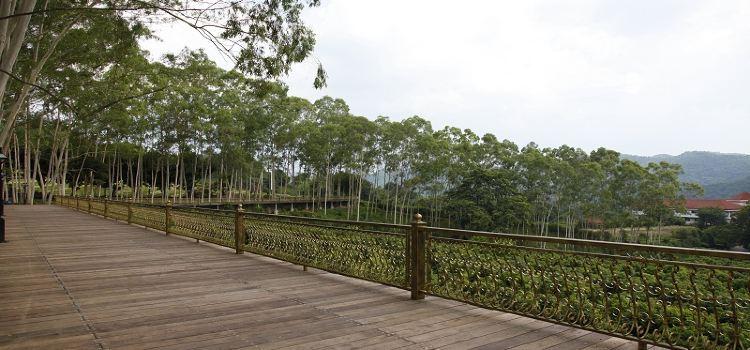 Yannanfei Tea Fields2