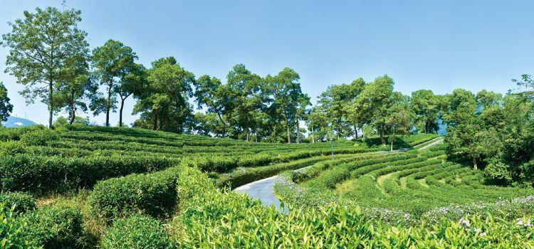 東部華僑城茶溪谷1