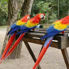 Macaw Mountain Bird Park & Nature Reserve User Photo
