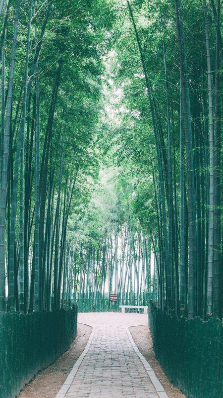 蘇州 閒暇週末 守候樹山