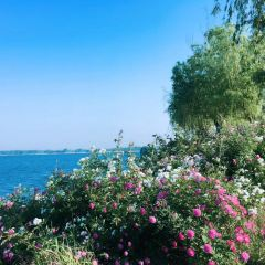西雙湖百合公園用戶圖片