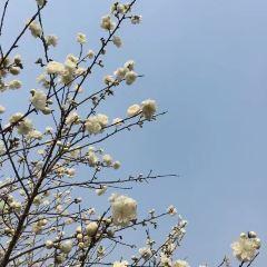 Meihuagu Park User Photo