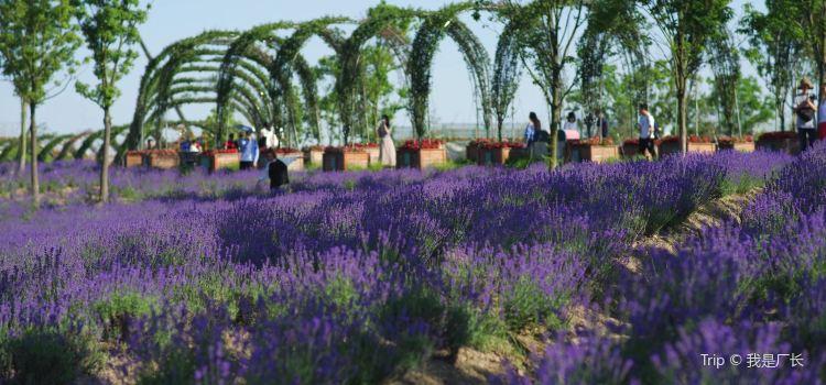 Momchilovtsi Herb Garden1
