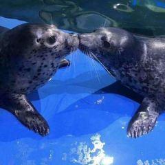 壽光極地海洋世界用戶圖片