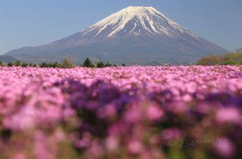 Impressive Flowerr Fields