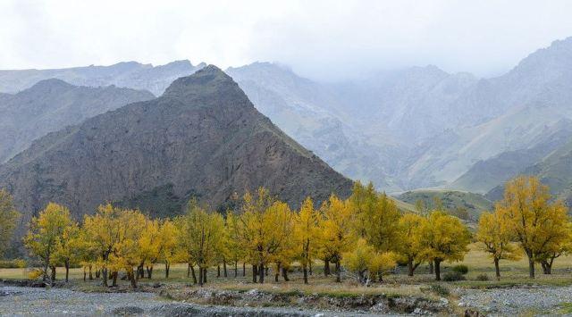 走起!坐火車去新疆吧,500元都不用!一站一景美哭了!