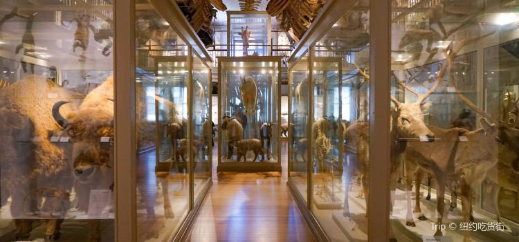 Museum of Comparative Zoology1