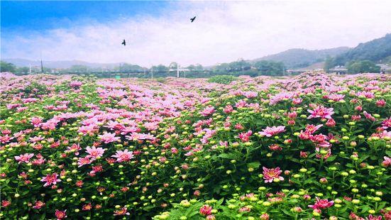 臨湘菊花博覽園