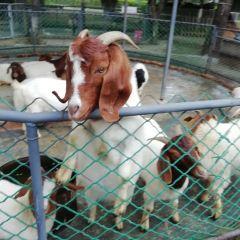 꾸이린동물원 여행 사진