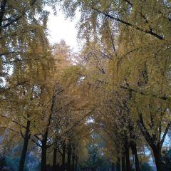 鄭州人民公園用戶圖片